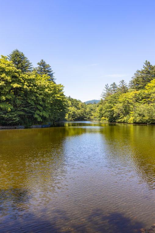 新緑と青空の雲場池(軽井沢)/縦アングルのフリー写真素材
