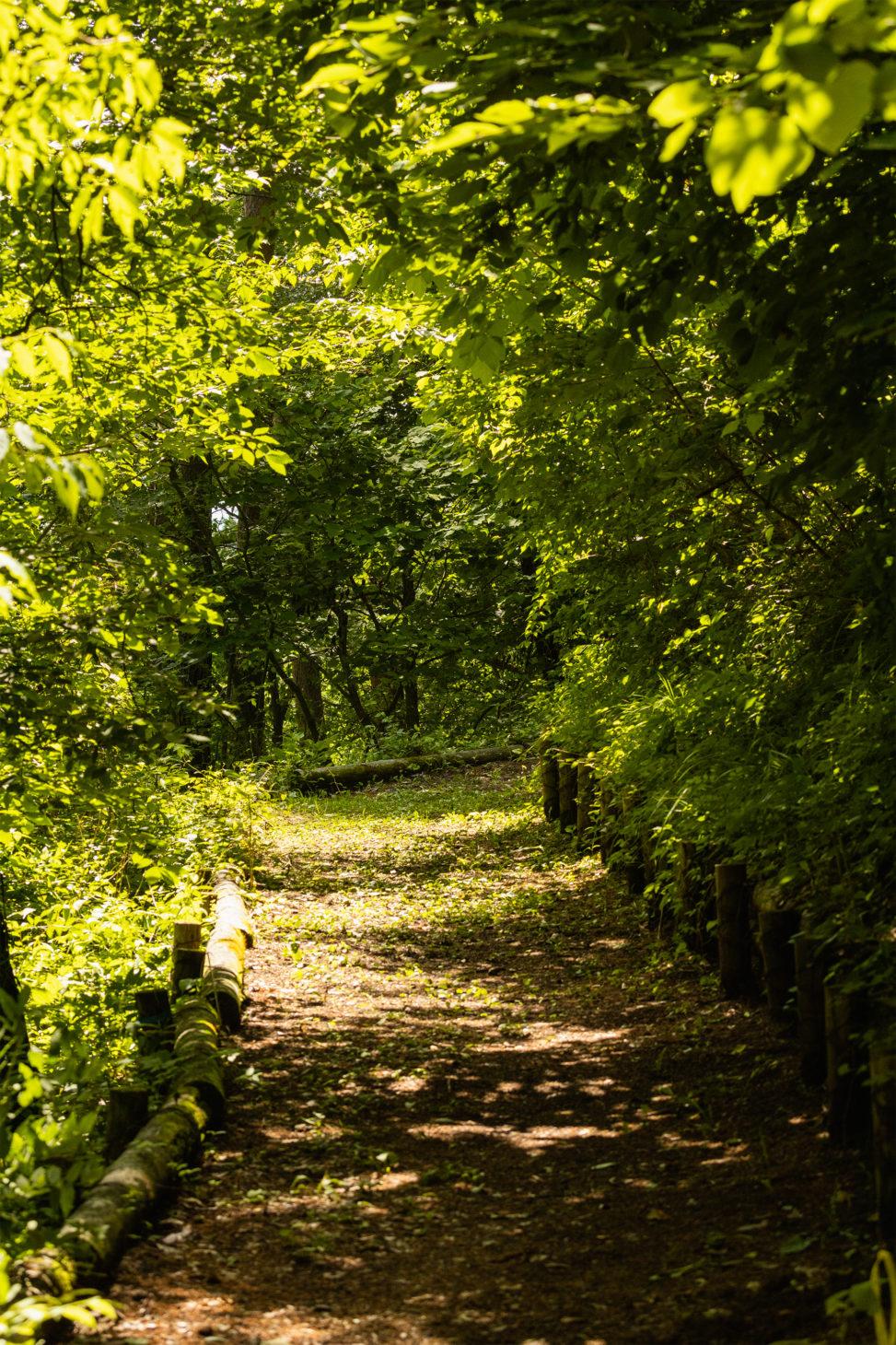 新緑の小道のフリー写真素材