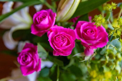 濃いピンク色のバラ(薔薇)の花のフリー写真素材