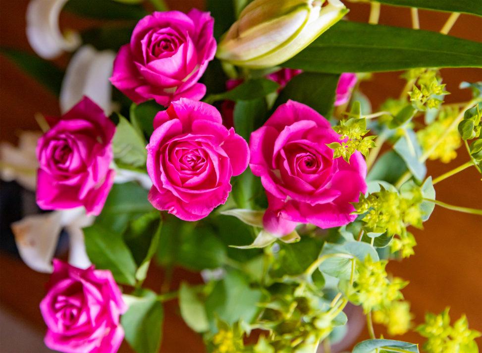 濃いピンク色のバラ(薔薇)の花02のフリー写真素材