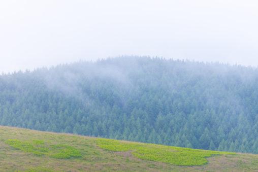 霧ヶ峰高原の霧の風景のフリー写真素材
