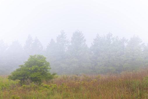 霧ヶ峰・新緑と霧のフリー写真素材