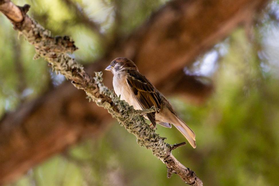 木の枝にとまるスズメ(雀)の写真