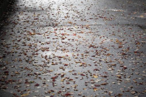 濡れたアスファルトと落ち葉の写真