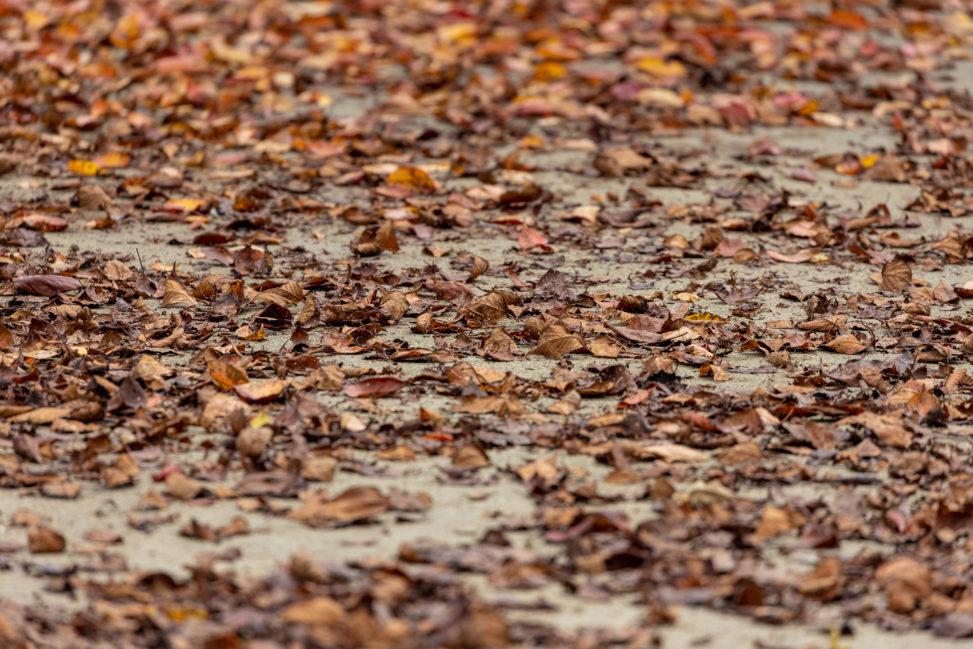 秋の落ち葉の写真