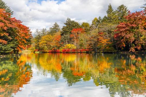 紅葉と雲場池(軽井沢)の写真