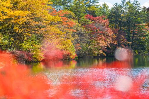 紅葉と雲場池(軽井沢)_2の写真