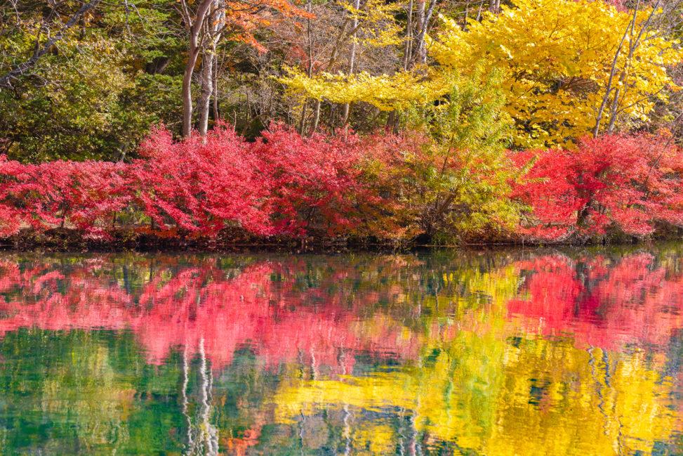 紅葉が反射する雲場池(軽井沢)の写真