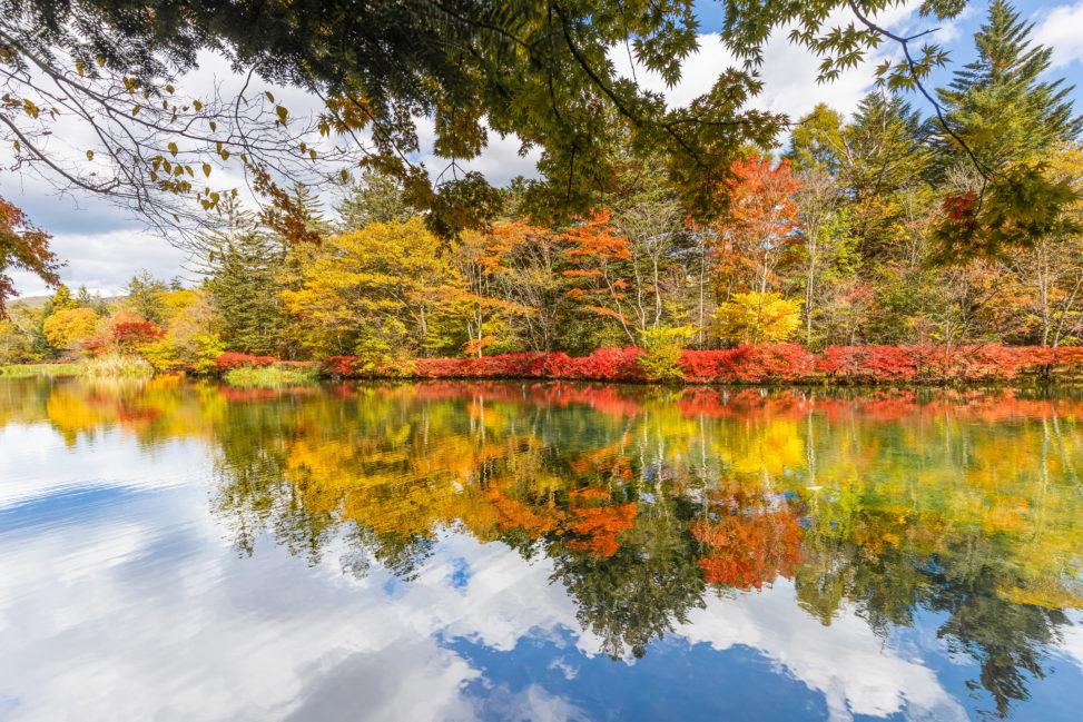 青空と紅葉の雲場池(軽井沢)の写真