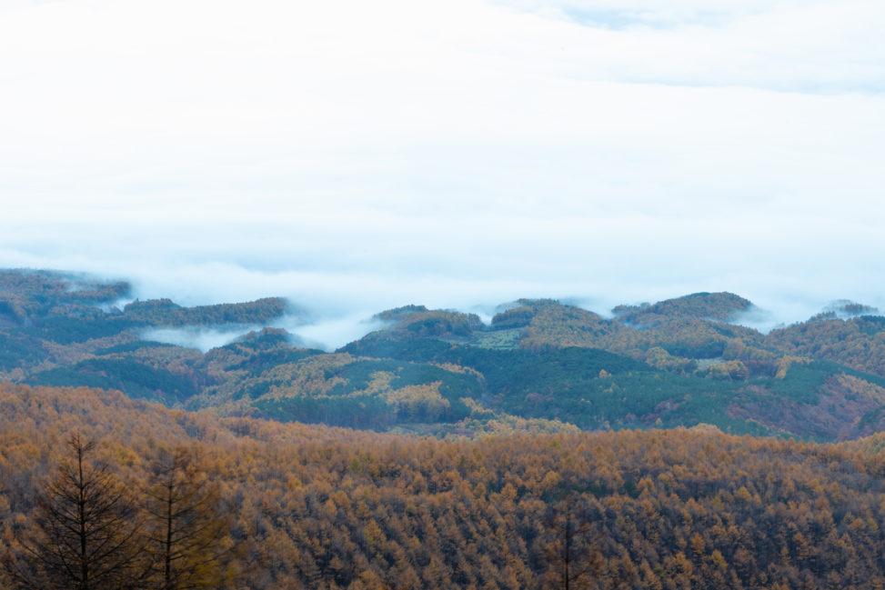 高峰高原の紅葉と雲海_2の写真