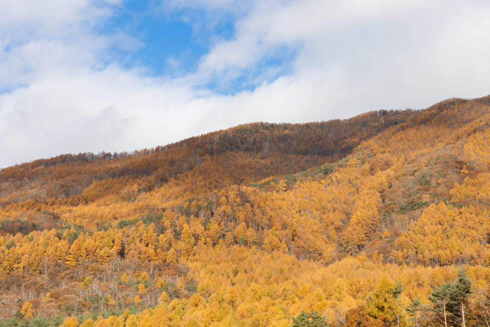 高峰高原の紅葉と晴天の空の写真