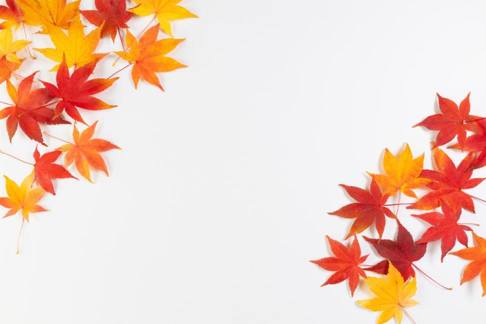 紅葉/もみじ/楓の斜めフレーム・囲み枠の写真