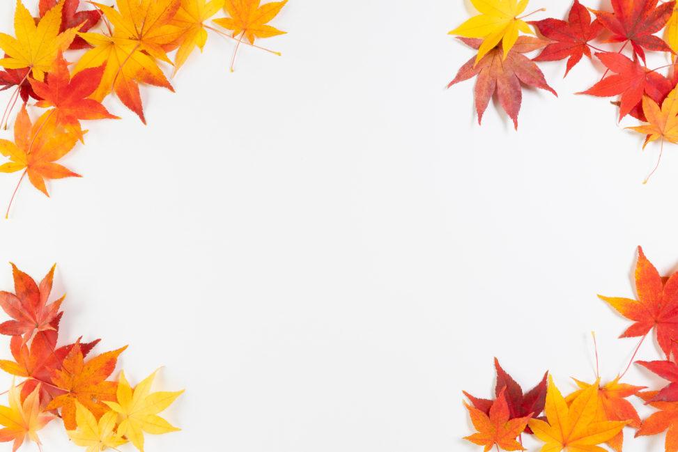 紅葉/もみじ/楓の四隅フレーム・囲み枠の写真
