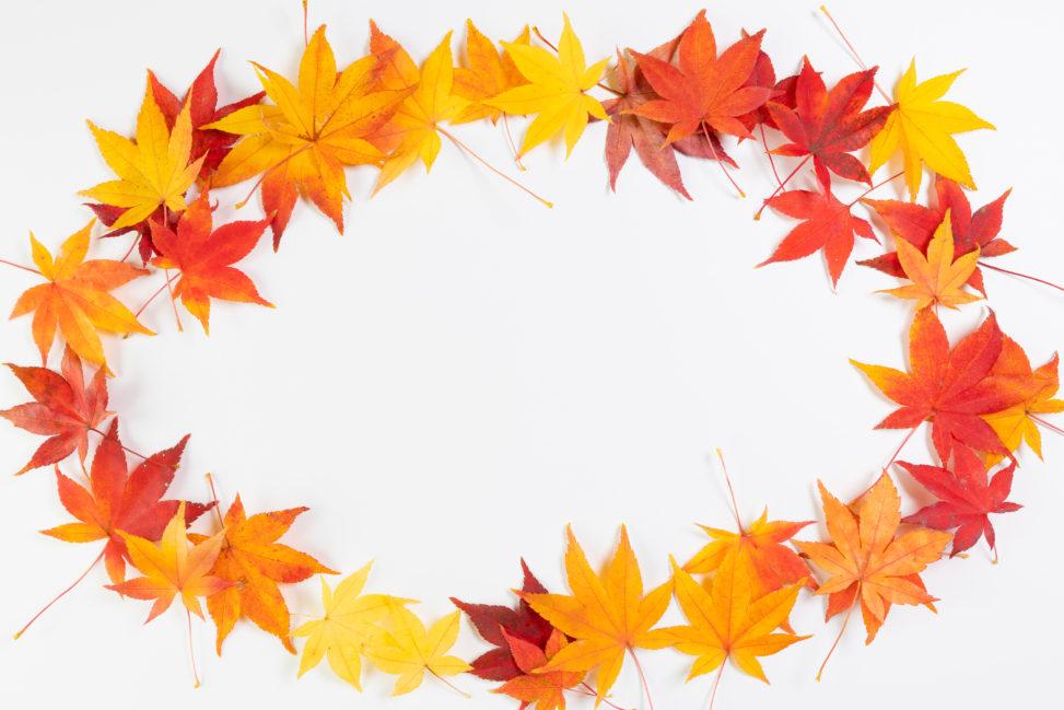 紅葉/もみじ/楓の楕円形フレーム・囲み枠の写真