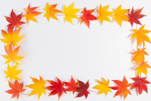 紅葉/もみじ/楓の長方形フレーム・囲み枠の写真