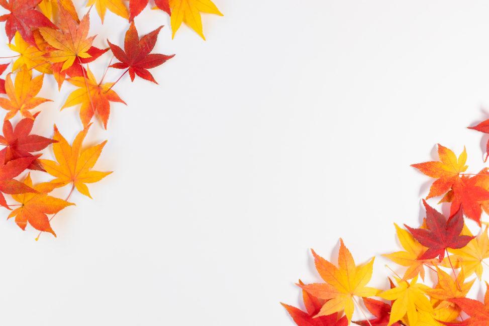 紅葉/もみじ/楓の斜めフレーム・囲み枠_2の写真