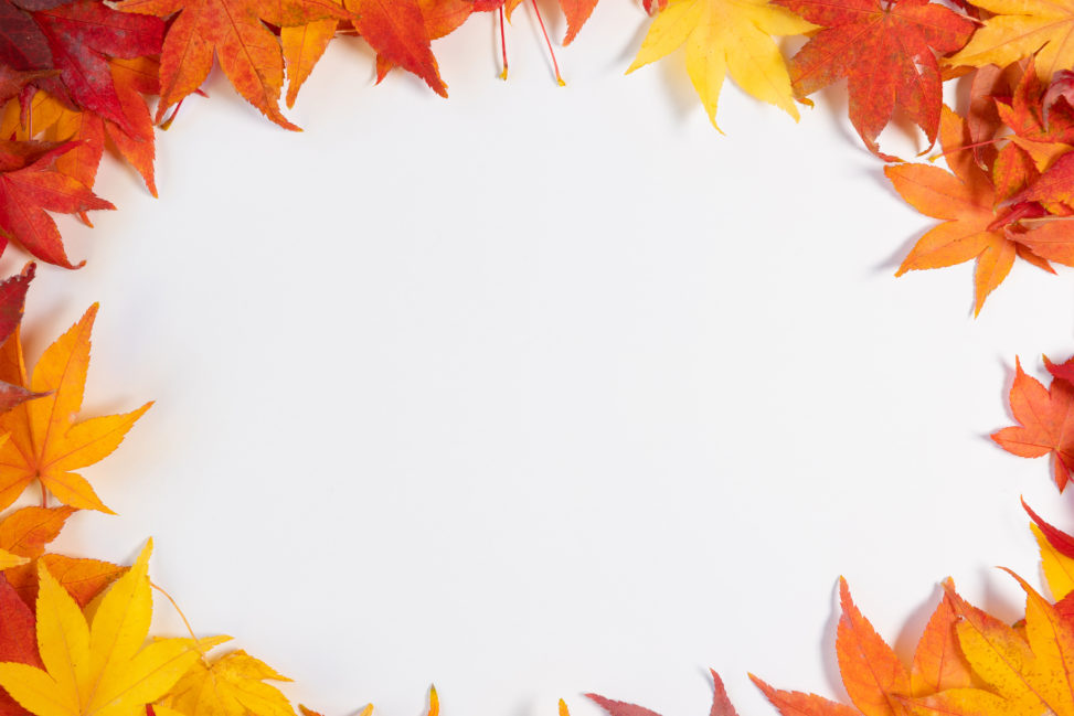 紅葉/もみじ/楓の楕円形フレーム・囲み枠_2の写真