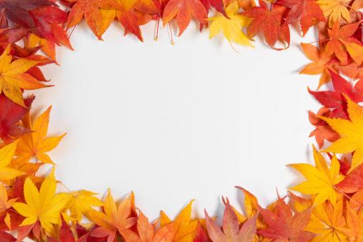 紅葉/もみじ/楓のフレーム・囲み枠の写真