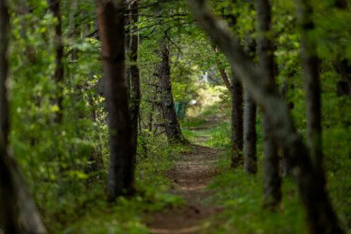 新緑の森の小道の写真