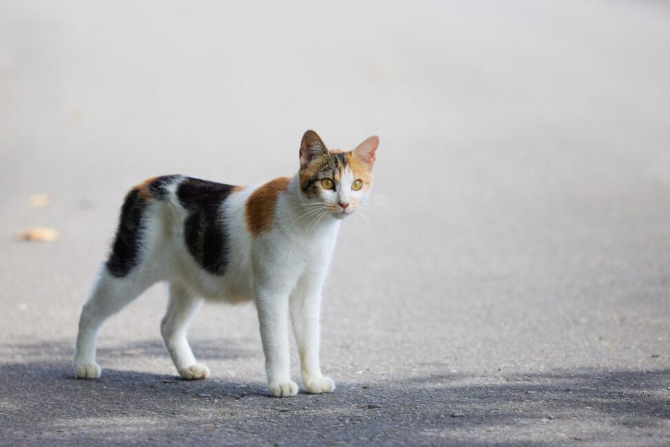 三毛猫/子猫の写真