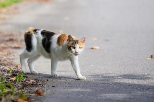三毛猫/子猫_2の写真