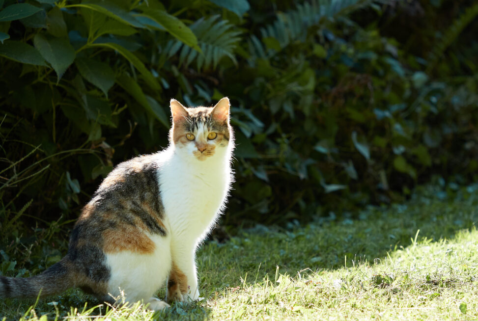 三毛猫/座り姿の写真
