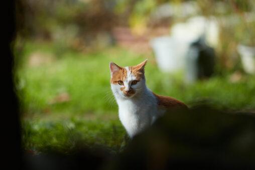 かわいい猫/正面の写真