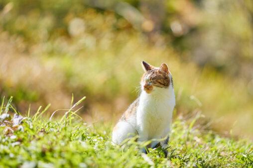日向ぼっこ/お座り/かわいい三毛猫の写真